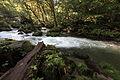 Oirase Stream 川(かわ) 2.jpg
