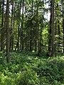 Olšina v Novolhotském lese (007).jpg