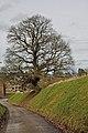 Old Oak in Mont.jpg