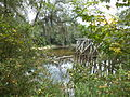 Old Withlacoochee Rail Bridge from Madison County 02.JPG