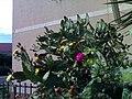 Opuntia ficus-indica a Torricola.jpg
