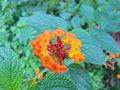 Orange colour flower - macro shot.jpeg