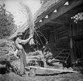 Otepanje rži, Zgornja Slivnica 1949.jpg