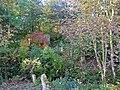 Overgrown part of Kilfinan churchyard - geograph.org.uk - 1651810.jpg