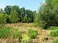 Pístecký les NR 2.jpg