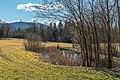 Pörtschach Winklern Brockweg Teich mit Typha latifolia 18022020 8361.jpg