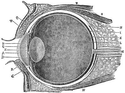 PSM V28 D061 Vertical section of the eye.jpg