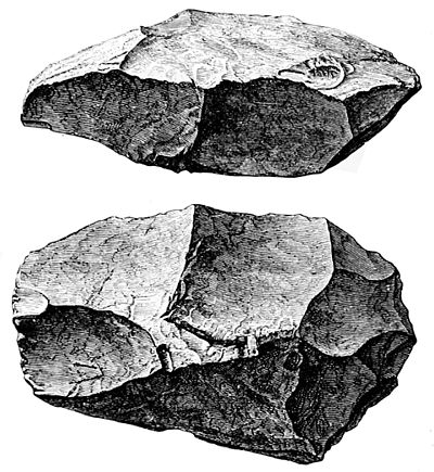 PSM V43 D690 Two views of a specimen from trenton gravels.jpg