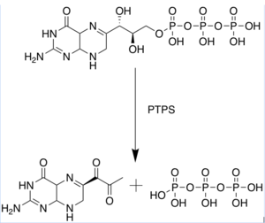PTPS catalyzed synthesis of 6-Pyruvoyltetrahyrdopterin