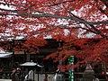 Paisaje de hojas coloreadas en Jakkoin, landscape of colored leaves in Jakkoin.jpg