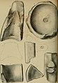 Palaeontographica (1846) (14741061216).jpg