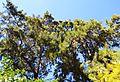 Palau de Forcalló, arbres del jardí.JPG