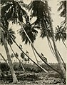 Panama and the canal (1910) (14778345234).jpg