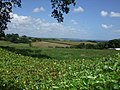 Panorama across fields at Lost Gardens of Heligan - geograph.org.uk - 1423269.jpg