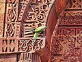 Parakeet on calligraphic inscription on the outside of Tomb of Iltutmish, Qutb Complex.jpg