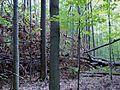 Parc-nature du Bois-de-l-ile-Bizard 11.jpg