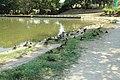 Parc Heller à Antony le 12 août 2015 - 032.jpg