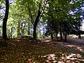 Parco dei Grumi dei Frati.JPG