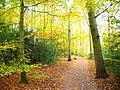 Park views in autumn (Netherlands 2011) (6311404115).jpg