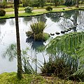 Parque Terra Nostra, Furnas, S. Miguel, Açores,Portugal - panoramio (10).jpg