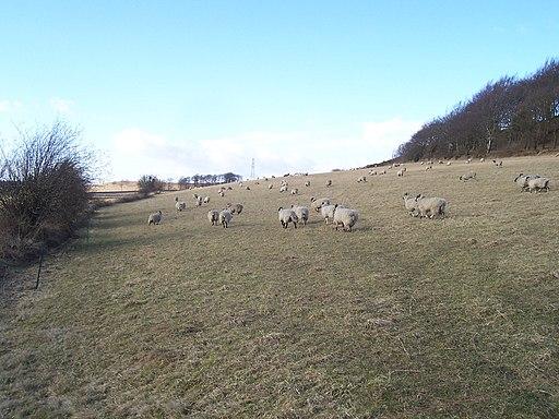 Pasture near Greno Wood - geograph.org.uk - 1755717