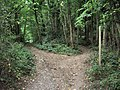 Path Junction in Caswell Wood - geograph.org.uk - 1509818.jpg