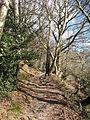 Path through Garbutt Wood - geograph.org.uk - 716871.jpg