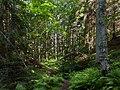 Path to a sunny patch in Gullmarsskogen ravine 2.jpg