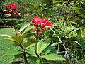 Penang Botanic Gardens (37).JPG