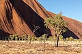 Petermann Ranges (AU), Uluru-Kata Tjuta National Park, Uluru, Kuniya Walk -- 2019 -- 3674.jpg