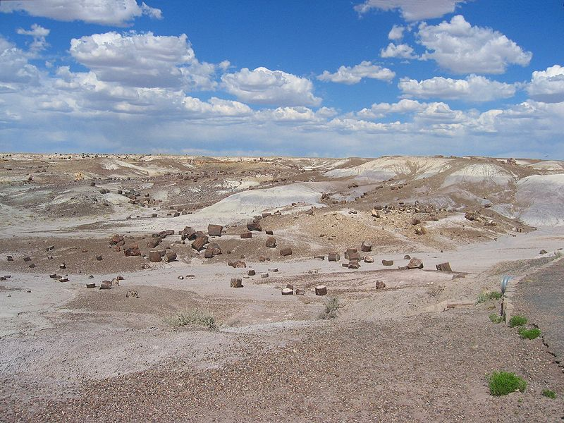 File:Petrified Forest National Park AZ.jpg