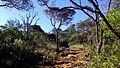 Pico da Bandeira, vegetação 01.jpg