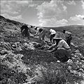 PikiWiki Israel 14791 Planting of the Gilboa Mountains.jpg