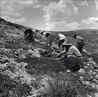 Jewish National Fund - Planting trees in the Gilboa mountains, c.1960