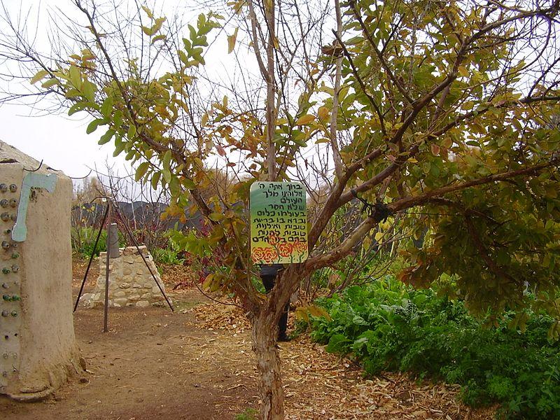 גן צמחי תבלין בקיבוץ לוטן