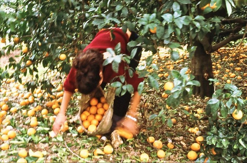 גן-שמואל 1988-בפרדס