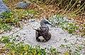 Piquero patiazul (Sula nebouxii), isla Lobos, islas Galápagos, Ecuador, 2015-07-25, DD 37.JPG