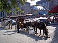 Place Jacques-Cartier 067.JPG