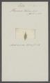 Planaria helluo - - Print - Iconographia Zoologica - Special Collections University of Amsterdam - UBAINV0274 105 06 0002.tif