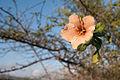 Planta por definir en Margarita Isla 3.jpg
