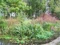 Pond, Trent - geograph.org.uk - 1566223.jpg