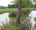Pond by Dameron's Farm - geograph.org.uk - 965438.jpg
