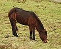 Ponies (33397865170).jpg