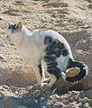 Pooping cat.jpg