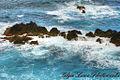 Porto Moniz, Madeira (16587146492).jpg