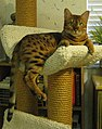 Posh in cat condo (cropped).jpg