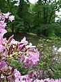 Průhonice, zámecký park, rododendron a Dobřejovický potok.jpg