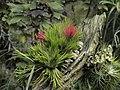 Praha, botanická zahrada, Fata Morgana - panoramio (4).jpg