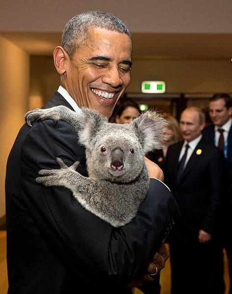 Hasta Barak Obama considera a los koalas como peluches…