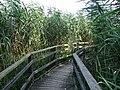 Pro Natura Zentrum Champ-Pittet 03.jpg